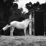 koń jaki jest