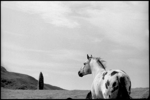 horse_LindaMcCartney1