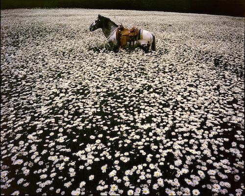 horse_LindaMcCartney2