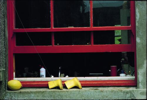 window_LindaMcCartney