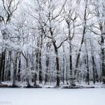 zima Macieja